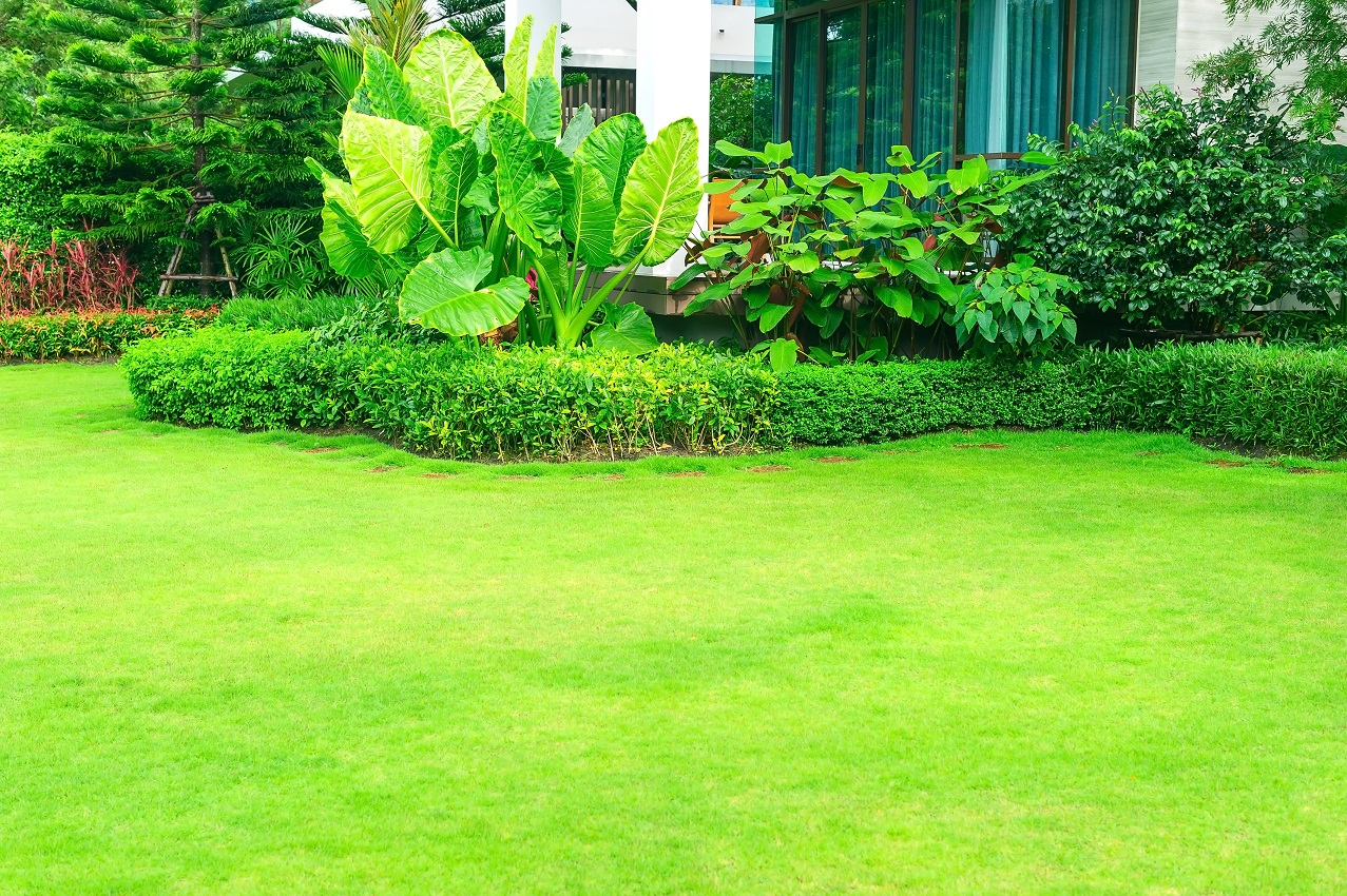 Purchasing Landscaping? Why Proper Irrigation Is Required To Keep Things Alive